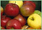 Apfel-Datenbank